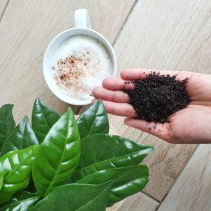 Kaffeepeeling von Body Boom
