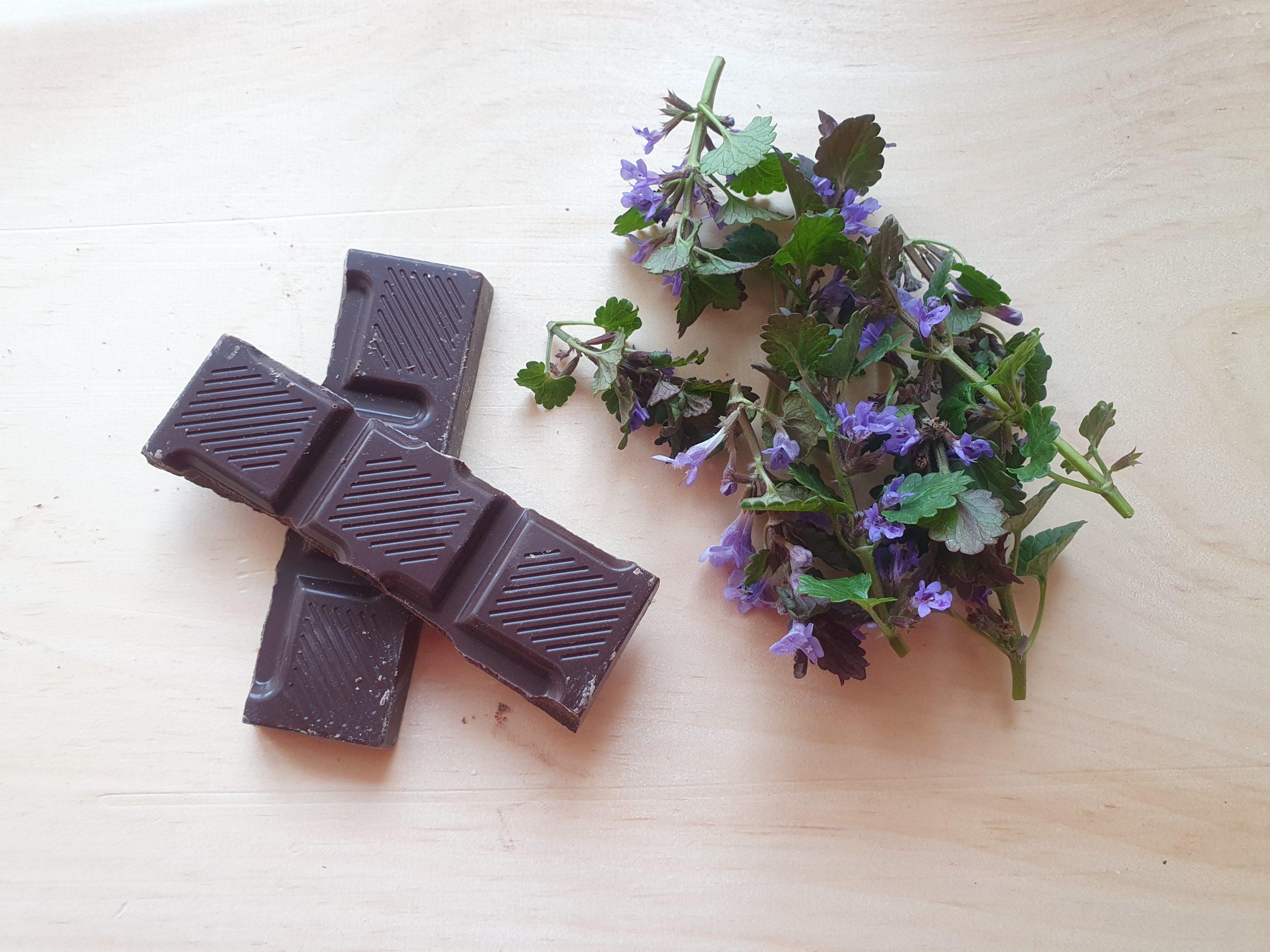 Alles, was ihr für diese Nascherei braucht, ist Schokolade und frischer Gundermann.