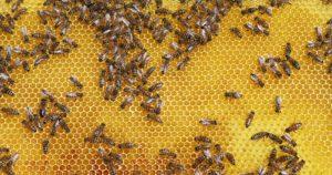 Die hautpflegenden Eigenschaften von Bienenwachs werden in der Kosmetik gerne genutzt.